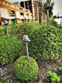 Ostriches bird head in your own garden bush! This funny ostrich birds head on a stick can be inserted in a garden bush. The funny head peeping out