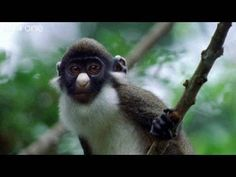 Storks invading personal space. Funny Talking Animals - Walk On The Wild Side - Episode Four Preview - BBC One - YouTube