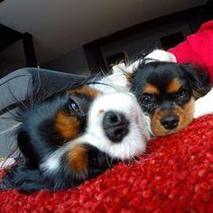 Good morning Spotty & Blacky