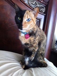 Venus The Cat! | Cutest Paw   I want this Cat!