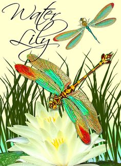 Dragonfly and Water Lily Digital Image Download by pixeltwister, $6.99