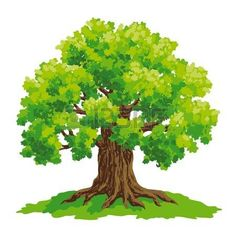 Find Vector Drawing Oak stock images in HD and millions of other royalty-free stock photos, illustrations and vectors in the Shutterstock collection. Oak Tree Drawings, Cartoon Trees, Tree Clipart, Tree Illustration, Art Illustrations, Baby Clip Art, Watercolor Trees, Tree Forest, Vector Photo