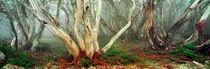 Snowy River Country, VIC, Australia. Photo: Ken Duncan
