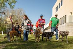 Registration is now open for Mutt March, northeast Florida's largest pet walk and festival! All proceeds from Mutt March will benefit the more than pets Large Animals, Humane Society, Gain, January, Events