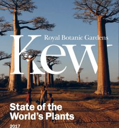 Cover of the State of The Worlds Plants 2017 Report. Image used with permission of Kew Royal Botanic Gardens. Orchids top the list for most traded and endangered plant families. This is according to the new Kew Gardens State of The Worlds Plants report (SOTWP) released on May 18 2017. The Convention of International Trade of Endangered Species (CITES) of Wild Fauna and Flora sets the rules and guidelines for traded plants. 26567 orchids are listed in the CITES index and orchids made up 29%…