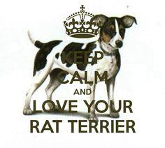 KEEP CALM AND LOVE YOUR RAT TERRIER;; Ill always love mine<3 R.i.p Fanta, my precious baby