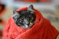 """Emergency Kittens on Twitter: """"https://t.co/ucBDhq1Lmr"""""""