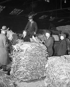 Farmers bring in their tobacco crop, possibly to the Huntington, WV Tobacco Warehouse circa 1940-1950