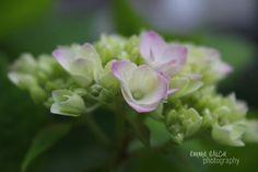 Blooming @emmaericaphotogray