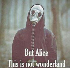 This isn't Wonderland.