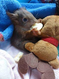baby squirrel cuteness overload