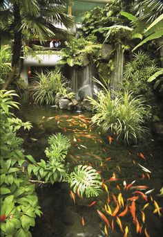 Where the city disappears, a sanctuary arises. - at Shangri-La Hotel, Backyard Water Feature, Ponds Backyard, Koi Ponds, Tropical Garden Design, Garden Landscape Design, Pond Landscaping, Tropical Landscaping, Small Water Gardens, Goldfish Pond