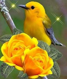 Solve Yellow Bird with Yellow Blooms jigsaw puzzle online with 72 pieces All Birds, Cute Birds, Pretty Birds, Beautiful Creatures, Animals Beautiful, Cute Animals, Beautiful Flowers Wallpapers, Beautiful Roses, Exotic Birds