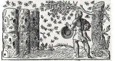 a history of log hives