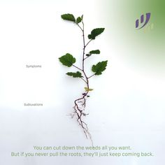You can cut down the weeds all you want. But if you never pull the roots, they'll just keep coming back. #GetAdjusted #chiropractic #chiropractor