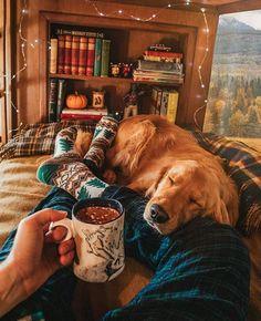 a golden retriever. Cute Puppies, Cute Dogs, Dogs And Puppies, Doggies, Animals And Pets, Cute Animals, Autumn Aesthetic, Autumn Cozy, Cosy Winter