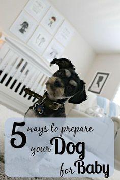 5 Ways to Prepare you Dog for Baby #pregancypreparation #pregnancyprep #Preparedogforbaby #preppingdog #dogtraining #maternity #motherhood #pregnancy #pregnant #animals #pets