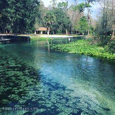 Kelly Park Rock Springs is Orlando's best-kept secret Florida Kelly Park Rock Springs, Rock Springs Run, Blue Springs State Park, Florida Springs, Orlando Travel, Orlando Vacation, Florida Vacation, Florida Travel, Florida Trips