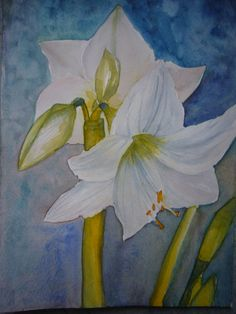Lily watercolour