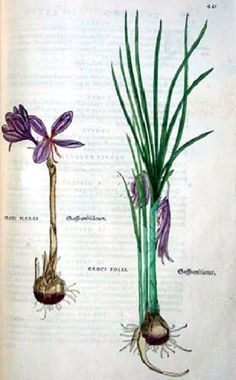 It's About Time: Making an Herbal with Leonhart Fuchs (1501-1566)