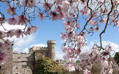 Carhayes Castle, St Michael Caerhays, Cornwall, England