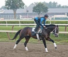 Verrazano, the morning line favorite,  working out Thursday before Saturday's Travers Stakes at Saratoga