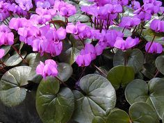 purple and green by _poseidon_, via Flickr