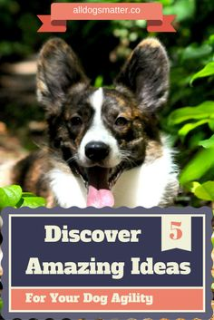 TOP 5 Amazing Ideas For Your Dog Agility - Just for Die Hard Dog Lovers