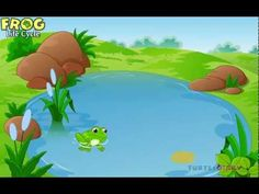 Educational Video on Frog's Life Cycle. Check out more Online Learning Videos. First Grade Science, Kindergarten Science, Science Classroom, Teaching Science, Science Activities, Science Fun, Spring Activities, Holiday Activities, Teaching Ideas