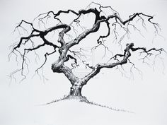 small twisted tree - Google Search