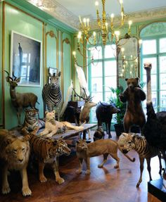 """Deyrolle, my favourite shop in the world."" Can't even wait to incorporate creepyawesome taxidermy into my home."