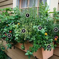 Grow Herbs Out Your Window - Better Homes and Gardens