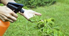 Fantástico! 11 utilidades do vinagre em seu jardim - # #jardim #plantas #PragasdeJardim #vinagre