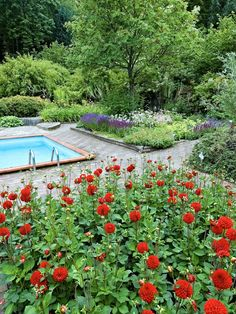 Idéträdgården i Norrvikens Trädgårdar är ett bra exempel på hur en pool integreras i trädgården. Smärre nivåskillnader och upphöjda rabatter bryter av och gör området intressant. Ett kronträd och ett bambubuskage bidrar med vertikala linjer.