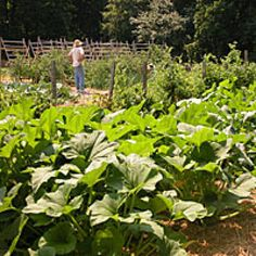 Planning a Vegetable Garden? 6 Things to Consider: Starting with a large vegetable garden is tempting, but often overwhelming. Start small. You can always add on.