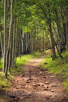 Aspens Of Alpine Arizona Natur Pur Supersion Mountains Haunted Forest Walking Paths