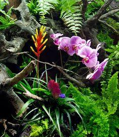 Detalle de paludario con orquídeas • Paludarium with orquids, detail