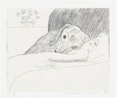 Dog Wall N° 9 - David Hockney