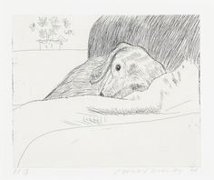 Dog Wall N° 9 - David Hockney