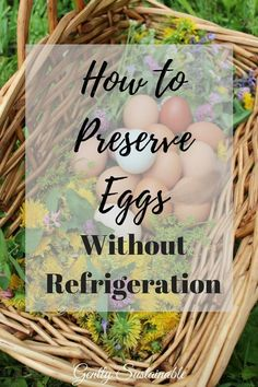 "You don't need a frig to keep your eggs fresh! When your hens are laying more eggs than you can manage, try this method! ""How to Preserve Eggs without Refrigeration - Updated! Preserving Eggs, Urban Chickens, Chicken Breeds, Chicken Coops, Chicken Eggs, Chicken Life, Raising Chickens, Keeping Chickens, Hobby Farms"