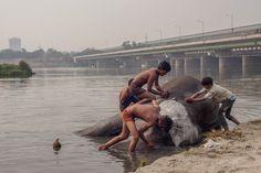 Photographing Delhi's Inner City Elephants   VICE   United Kingdom