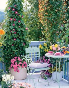 Love the morning glories in a container, and how the container planting below echoes the color!