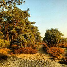 Drenthe: natuurgebied de Hondsrug