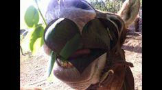 amazing donkey face