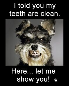 Funny Dog Photos with Captions I told you my teeth are clean let me show you