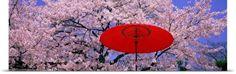 Poster Print Wall Art Print entitled Red Umbrella and Cherry Blossoms Hikone Shiga Japan, None