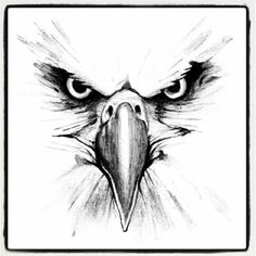 Eagle Head Pencil Drawing The Eagles, Eagles Head, Art - - jpeg Eagle Face, Bald Eagle, Animal Drawings, Pencil Drawings, Eagle Sketch, Bird Sketch, Adler Tattoo, Eagle Drawing, Tattoo Zeichnungen