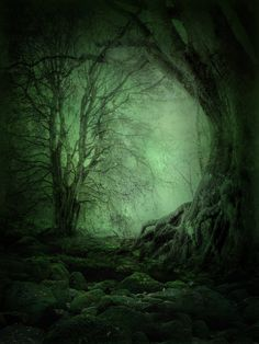 Magical woodland.