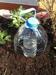 It is a highly efficient, simple and inexpensive irrigation system; For shallow rooted plants. The water slowly evaporates from the smaller container, then falls to the ground to supply water over a longer period of time. Organic Gardening, Gardening Tips, Gardening Courses, Bottle Cutting, Aquaponics System, Aquaponics Fish, Self Watering, Recycle Plastic Bottles, Plantation