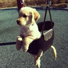First Doga (dog yoga)  Next - Dogs in Swings  Next thing you know, there will be dogs playing sports. Watch out.